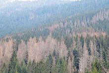 Обољеле шуме
