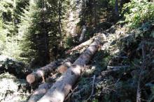 <p>Посјечена шума на простору Чакора</p>
