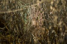 <p>Паукова мрежа, илустрација</p>