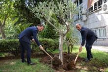 <p>Бечић и Алџавран посадили стабло маслине</p>