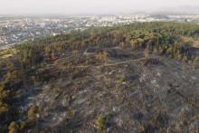 <p>Брдо Горица након пожара</p>