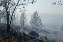 <p>У пожару изгореле животиње и шума</p>