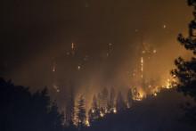 <p>Шумски пожар, илустрација</p>