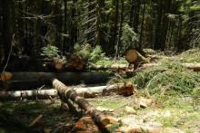 <p>Посјечена шума</p>