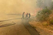 <p>Пожар у Печурицама (Фото: Драган Стојановић)</p>