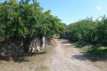<p>Макадамски пут заробиле гране и растиње</p>