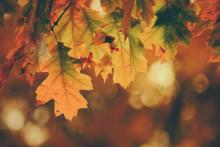 <p>Počinje jesen</p>
