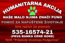 <p>Прикупљање средстава за напуштене животиње</p>