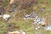 <p>Угинуле животиње на Јагњилу</p>