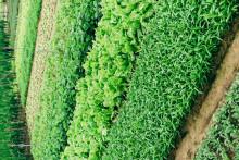 <p>Зелениш богат витамином А</p>